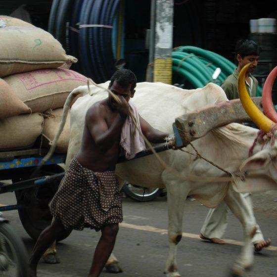 india-2007-08-256